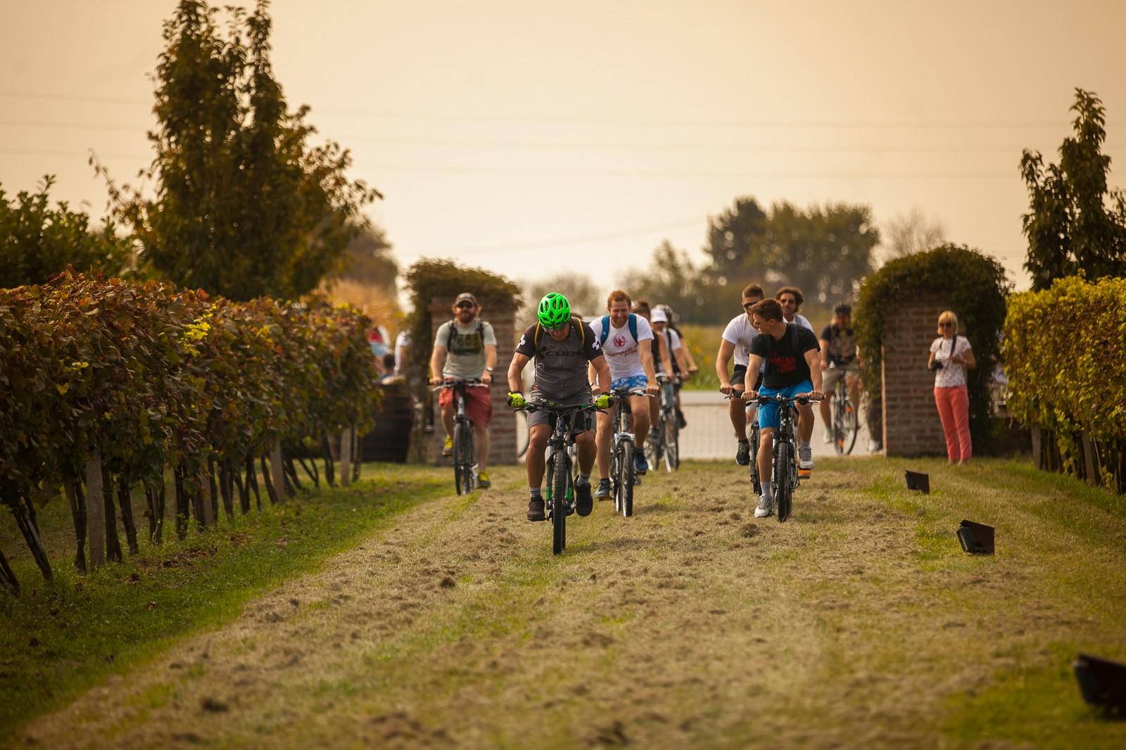 Wine&Bike Tour
