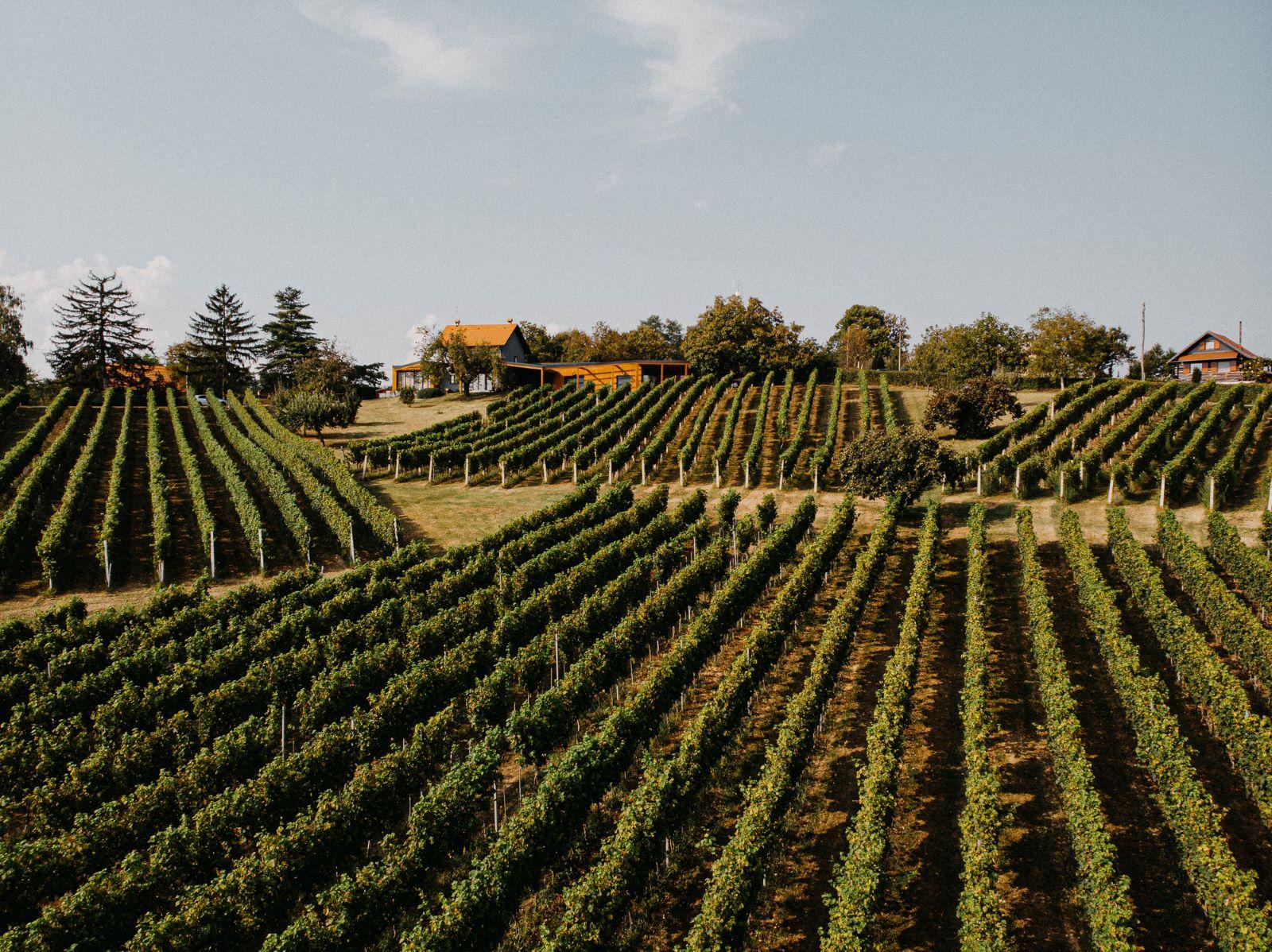 ivanić-grad vinograd