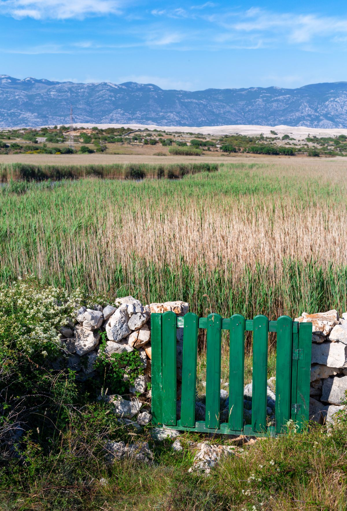 Kolanjsko blato - Rogoza