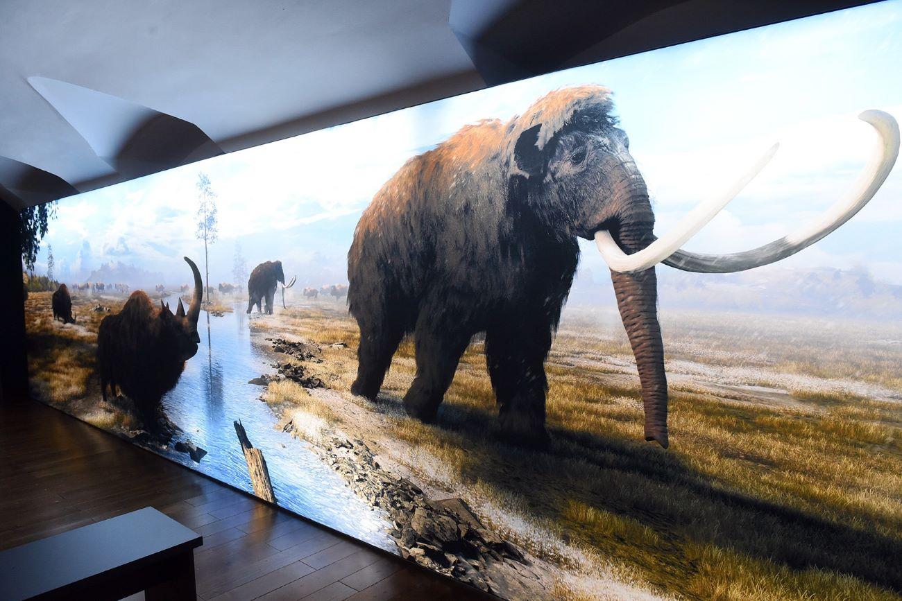 Erika, vunasti nosorog, Izvor: Arhiva Gradski muzej Varaždin